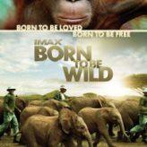 Born to Be Wild — Documentary Retroview (2011)