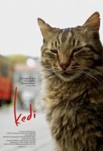 kedi pster