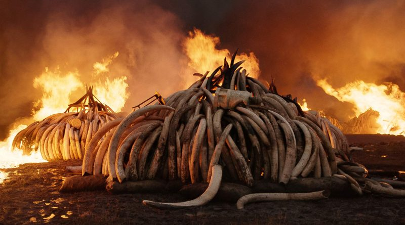 MOVIE OF THE WEEK October 4, 2010: ANTHROPOCENE: THE HUMAN EPOCH